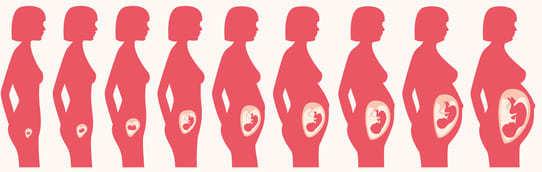 vaterschaftstest während der schwangerschaft